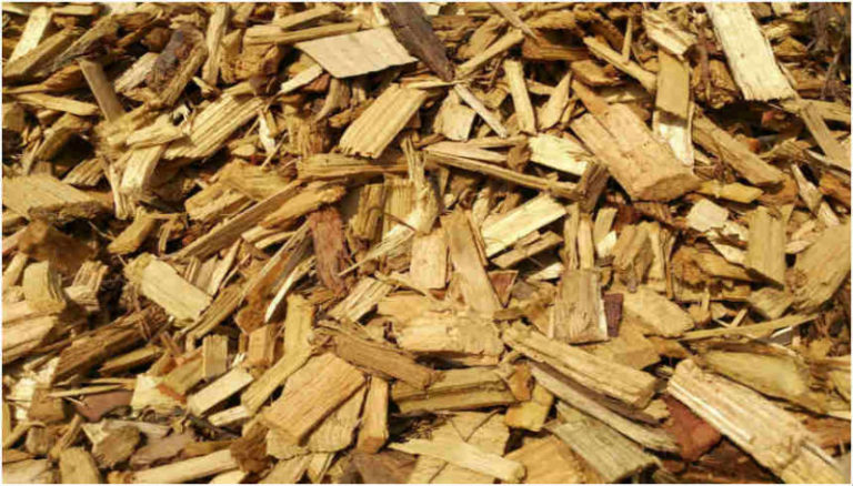 Biomass: Untapped potential in Africa