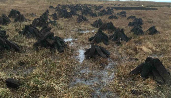 peat power plant