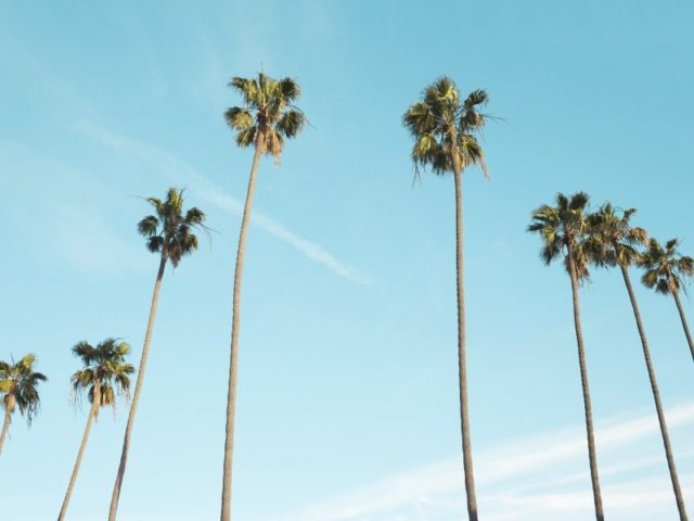 biomass palm trees