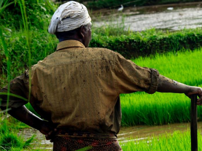 GreenMatter: The green economy